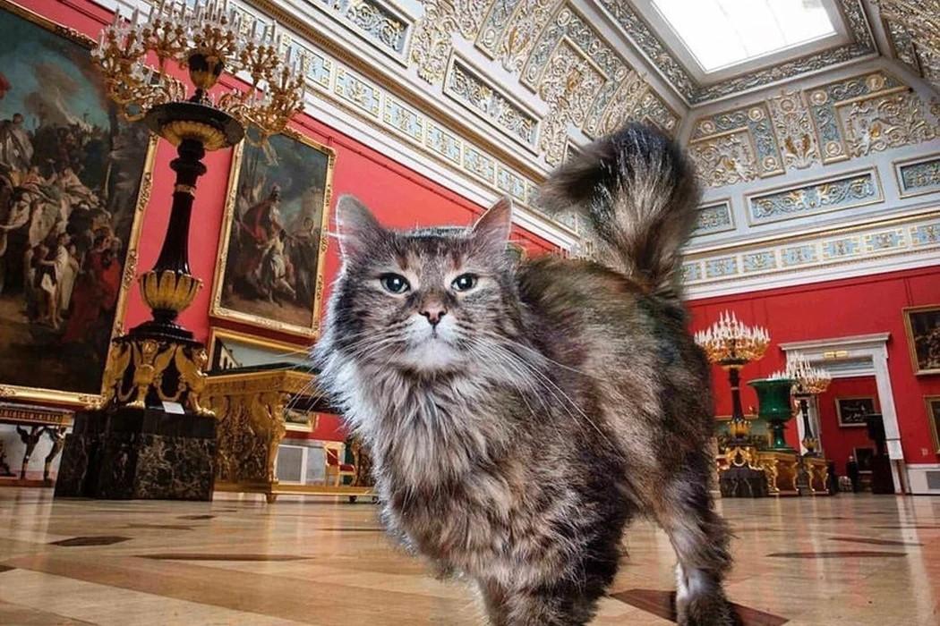 Об эрмитах. К всероссийскому Дню Кошек. Из записок на коленке