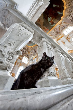 «Кот стиляга - эстет из Эрмитажа»