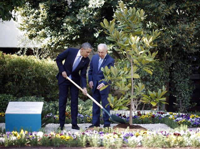 Obama—magnolia—w.jpg