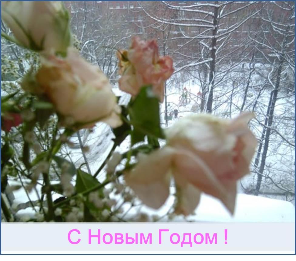 S_novym_godom2.jpg